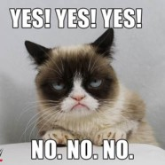 Can WWE make Grumpy Cat smile?